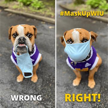 bulldog demonstrates proper mask wearing